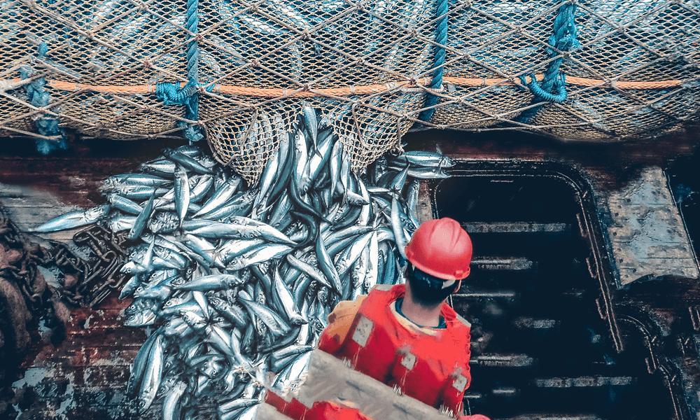Billede af en skib der har fanget mange fisk i et fiske net